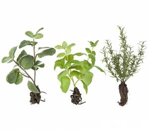 Bilde av Flora krydderurter H:24 cm
